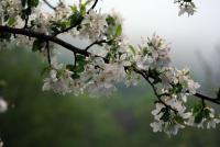 Весна на Аксауте.